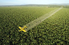 50-Year Data Link Pesticide to Breast Cancer